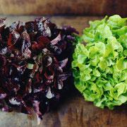 オークリーフレタス(oak leaf lettuce)