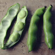 そら豆(Broad bean)