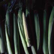 ヤングコーン(Young Corn)