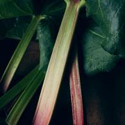 ルバーブ(Rhubarb)