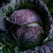 赤サヴォイキャベツ(Red savoy cabbage)