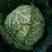 サヴォイキャベツ(Savoy Cabbage)