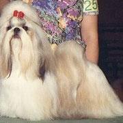 AMチャンピオン'JAZZ ラヴリンちゃんの祖父犬です。