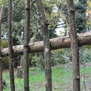 Befestigt sind sie je mit einer Schraube oben und unten. Wenn vorgebohrt wird reisst der Zweig nicht.