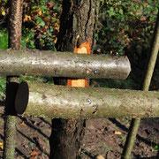 Für einen besseren Halt werden die Pfosten und Querriegel an den Verbindungen leicht angeplattet.