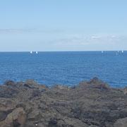 Seegelboote, Küste Costa del Silencio, Teneriffa