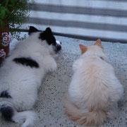 unsere Wachhunde, Einstein und Ikarus