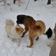 Hier treffen wir auch mal andere Hunderassen