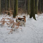 Abenteuer im Hundewald