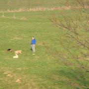 Spaziergang mit Cassy, Senta und Ikarus
