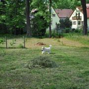 Grundstück zum Toben