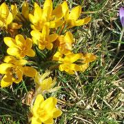 Frühling im Kesseltal