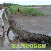 Crocodile tours