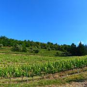Gite au milieu des vignes