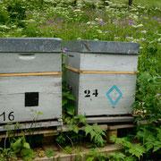 Ruche-Bee-hive-Bienenstock
