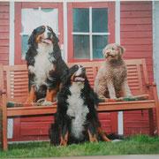 Die drei Kumpel warten schon sehnsüchtig auf Milow!
