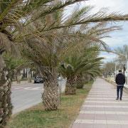 hübsche palmengesäumte Strandpromenade