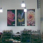 Werbebanner - Giardino Verde
