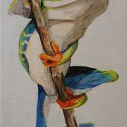 Frosch am Schilfrohr (Aquarell), 16,5 x 27 cm, gerahmt