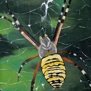 Spinne mit Netz (Öl), 60 x 30 cm