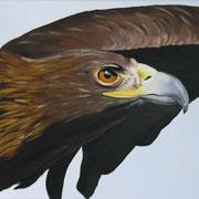Adler (Öl), 40 x 70 cm