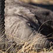 elephant with cub | chobe riverfront | botswana 2014
