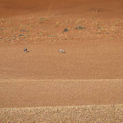 oryx antelopes | tiras mountains | farm kanaan | namib naukluft park | namibia 2015