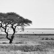 salt pan | etosha national park | namibia 2012