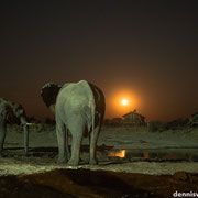 elephant sands | moonshine | botswana 2014