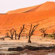 dead vlei | sossusvlei | namibia 2012