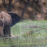 elephant | makgadikgadi | botswana
