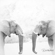 elephant namibia african wildlife safari photography dennis wehrmann www.awsomewild.de