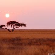 sunrise | etosha national park | namibia 2012