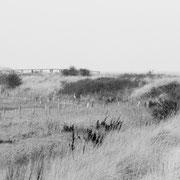 mist hohwacht | baltic sea | germany 2020