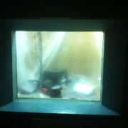 Verkratze Aquariumscheibe - Glaskratzer aus der Aquariumscheibe heraugeschliffen