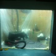 Verkratze Aquariumscheibe - Aufklarung der geschliffenen Aquariumscheibe