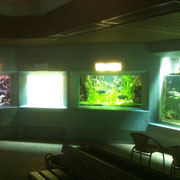 Verkratze Aquariumscheibe in Münster - Gesamtansicht der Einbausituation