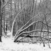 """Title: """"A winter's tale 01, b&w"""", december 2012 (printed on """"bamboo"""")"""