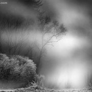 "Title: ""Frosty, misty, spooky 01, b&w"", december 2013 (printed on ""fine art baryta"")"