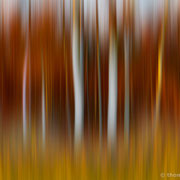 """Title: """"Autumnal daydream 01"""", october 2018 (printed on """"fine art baryta"""")"""