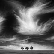 "Title: ""3 trees, up in the air 15, b&w"", 2016 (printed on ""fine art baryta"")"