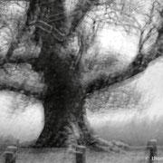 "Ghost Tree 01, b&w, january 2015 (printed on ""bamboo"")"