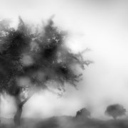 "Beautiful rainy day 02, b&w, june 2014 (printed on ""bamboo"")"