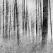 "Translucent daydream 04, b&w, june 2012, digital photo compositing 2018 (printed on ""bamboo"")"