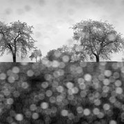 "Title: ""Beautiful rainy day 04, b&w"", april 2016 (printed on ""bamboo"")"
