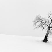 """Title: """"Waiting for spring 01, b&w"""", january 2016 (printed on """"bamboo"""")"""