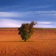 "Title: ""Late summer in the fields 02"", september 2014 (printed on ""fine art baryta"")"