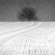 """Title: """"A winter's tale 04, b&w"""", january 2017 (printed on """"bamboo"""")"""