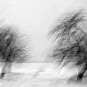 "Poetic trees 01, b&w, december 2014 (see also ""blurry trees"", printed on ""bamboo"")"