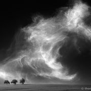 """3 trees, the beast 01, b&w, 2015 (printed on """"fine art baryta"""")"""